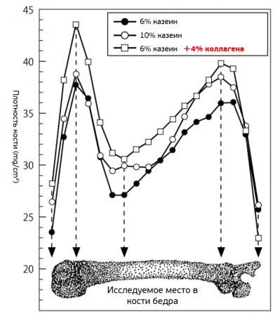 Исследование по влиянию коллагена на структуру кости